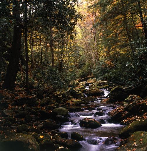 Stream running through forest