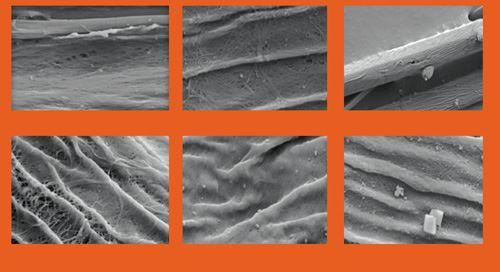 Nano-enhanced Kenaf SEM images