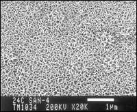 SEM of the surface after treatment