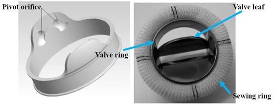 The pivot orifice of a mechanical heart valve