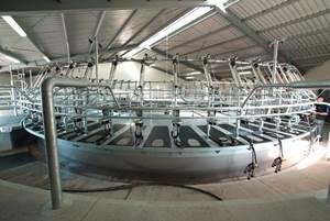 Milking platforms: Composites transform New Zealand cow sheds