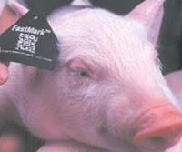 Laser-marked TPU ear tags for swine and cattle