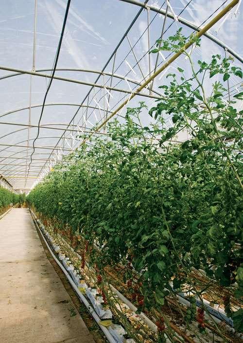 LDPE greenhouse