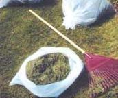 Biodegradable film