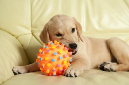StarPet TPE for pet toys from Star Thermoplastics