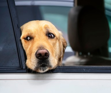 Study: Unrestrained Pets Hamper Safety