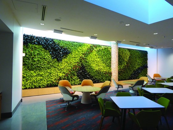 A living wall in an area near to a cafeteria. There are a variety of coffee shops, juice bars and cafeterias throughout the structure. There is an exercise facility and medical office. Overall it seems more like a facility for a company in Silicon Valley than a vehicle manufacturer.