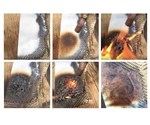 Smarter Building Systems develops fire-retardant epoxy