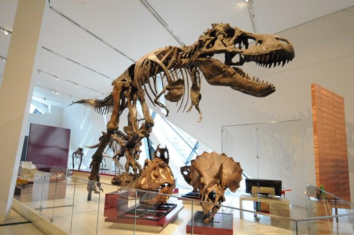 composite t-rex