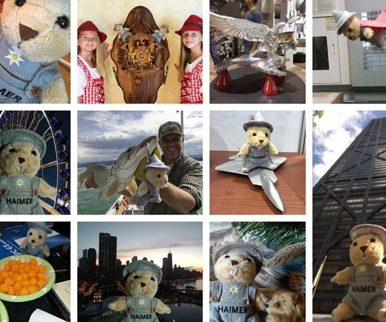 Marmot photo examples