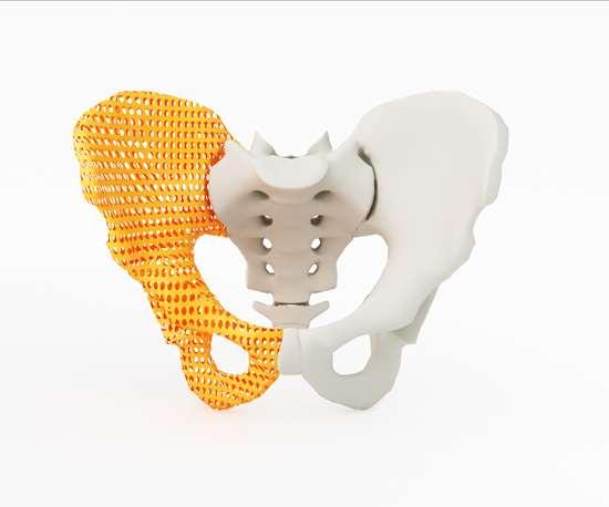 hip bone in 3D