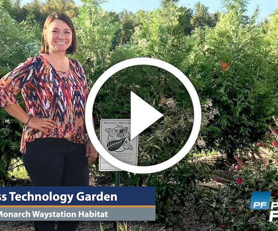 video of woman standing next to butterfly garden