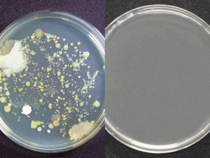 antimicrobial coatings, powder coating
