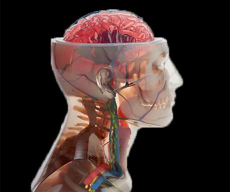 La impresora 3D J750 de Stratasys permite construir modelos anatómicos altamente realistas.