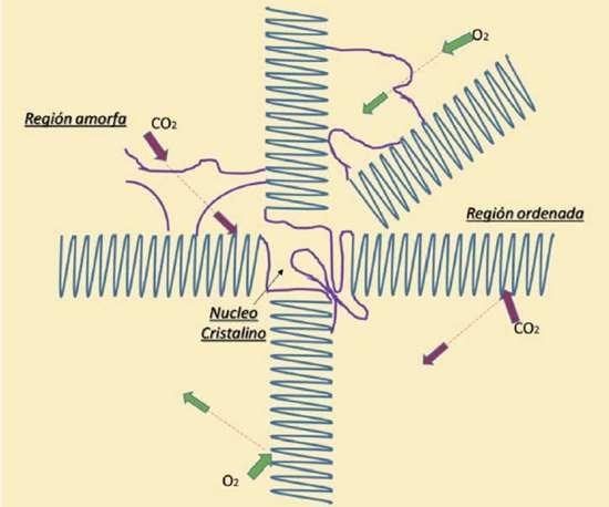 Fig. 1 Comportamiento de las zonas amorfas y cristalinas ante la difusión de los gases.