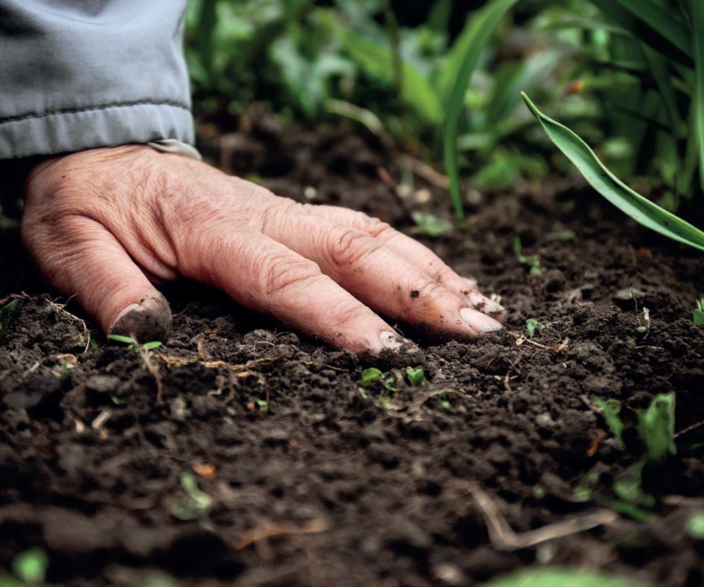 El Centro de Investigación en Química Aplicada (CIQA) ha desarrollado un sistema para la obtención de compuestos de fertilizante de liberación lenta basado en una matriz acarreadora a base de compuestos orgánicos biodegradables, el cual cabría dentro de los fertilizantes micro-granulados.
