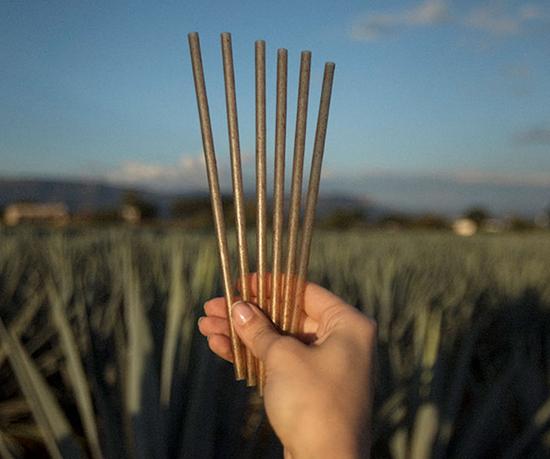 Gracias a la fabricación de estos productos con el compuesto a base de agave, los nuevos popotes reemplazarán alrededor de un tercio de los polímeros utilizados en la producción tradicional.