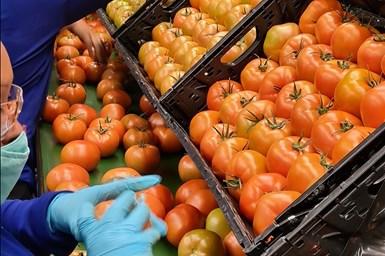 Agros Produce usa más de 400 mil RPCs de IFCO al año para envasar y transportar una variedad de tomates.