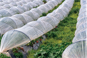 Una mirada a los plásticos en la agricultura de México