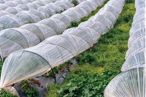 Agricultura protegida es la expresión utilizada para describir una serie de técnicas de cultivo que controlan total o parcialmente el microclima que rodea a la planta.