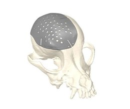 digital model of a dog skull with 3d printed titanium plate