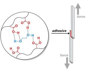 Researchersexplore biomimetic approach for making adhesives tougher