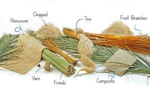 可持续的日期棕榈纤维从农业垃圾中产生