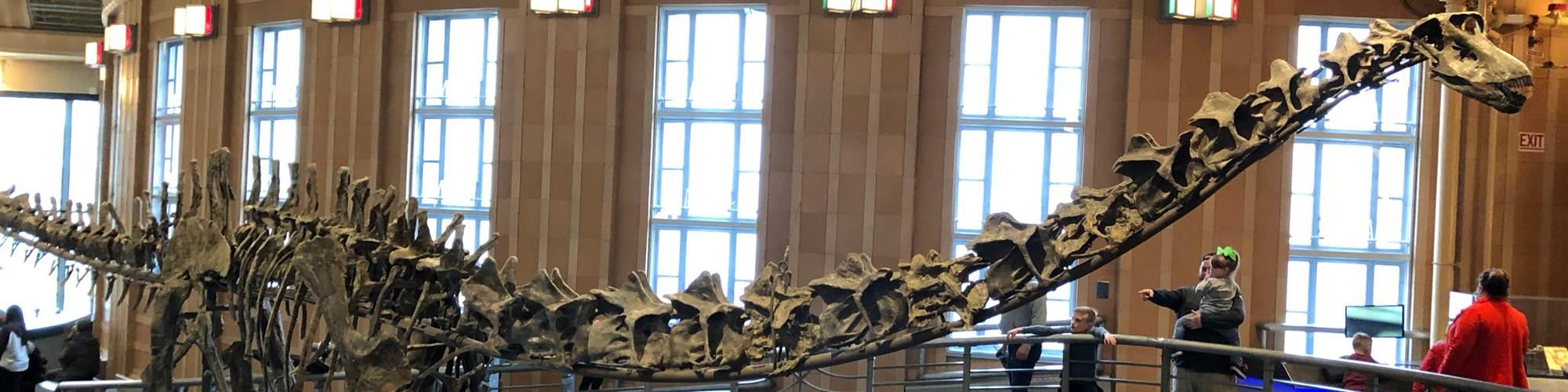 composite casts for dinosaur skeletons