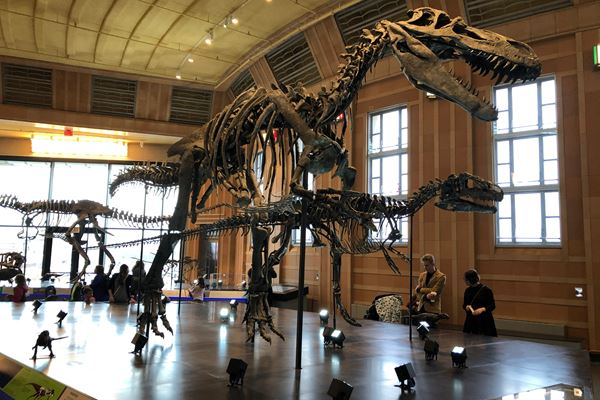 Composites fill the gaps in museum dinosaur skeletons image