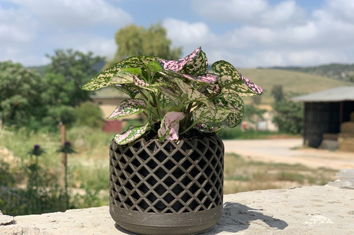 3d-printed plant container